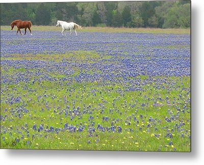 Horses Running In Field Of Bluebonnets Metal Print by Connie Fox