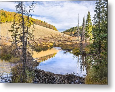 Horsethief Creek Beaver Pond - Cripple Creek Colorado Metal Print by Brian Harig