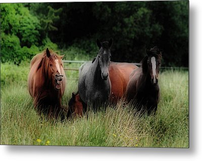 Horsing Around Metal Print by Peter Skelton