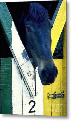 Horsing Around Metal Print by Ranjini Kandasamy