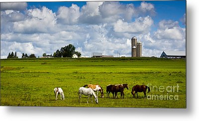 Metal Print featuring the photograph Horsing Around  by Ricky L Jones
