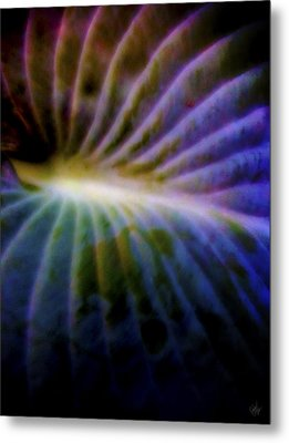 Hosta Leaf Metal Print by Matt Lindley