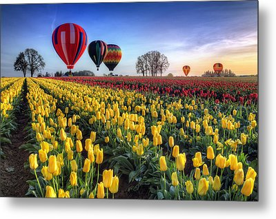 Metal Print featuring the photograph Hot Air Balloons Over Tulip Fields by William Lee