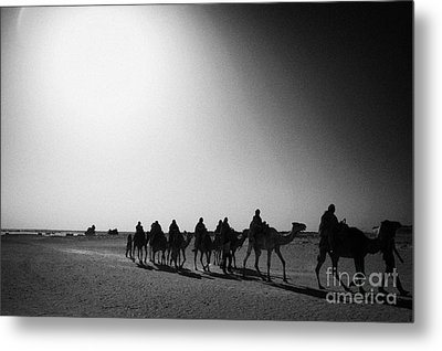 hot desert sun beating down on camel train in the sahara desert at Douz Tunisia Metal Print by Joe Fox