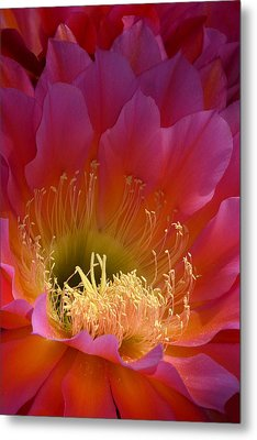 Hot Pink Beauty Metal Print