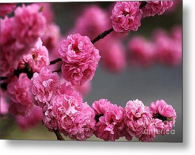 Hot Pink Blossom Metal Print by Joy Watson