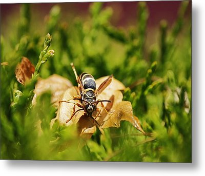 Hot Wasp... Metal Print by Al Fritz