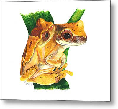 Hourglass Treefrog Metal Print by Cindy Hitchcock