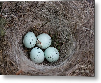 House Finch Nest Metal Print by Erica Hanel