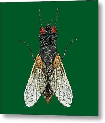 House Fly In Green Metal Print by R  Allen Swezey