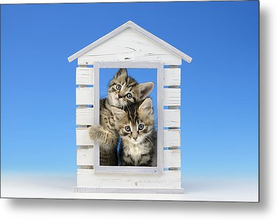 House Kittens Metal Print