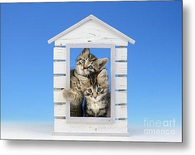 House Of Kittens Ck528 Metal Print by Greg Cuddiford