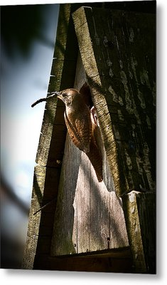 House Wren At Nest Box Metal Print