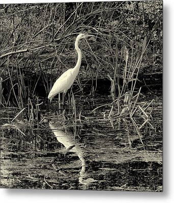 Houston Wildlife Great White Egret Black And White Metal Print by Joshua House