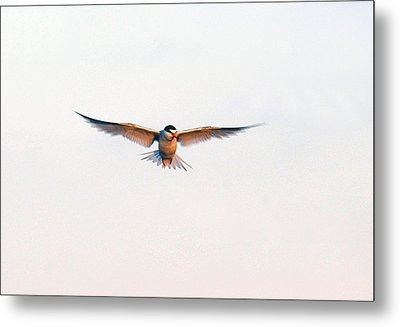 Hover Metal Print by Barry Goble
