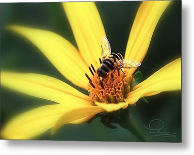 Metal Print featuring the photograph Hover Fly On Flower by Ludwig Keck