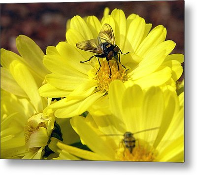 Hoverfly Metal Print by Christina Rollo