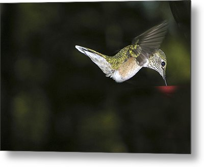 Hovering Beauty Metal Print by Ron White