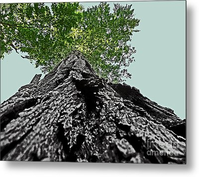 How A Chipmunk Sees A Tree Metal Print