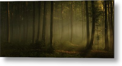 How Can Words Express The Feel Of Sunlight In The Morning Metal Print by Norbert Maier