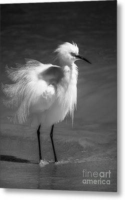 How Do I Look- Bw Metal Print by Marvin Spates