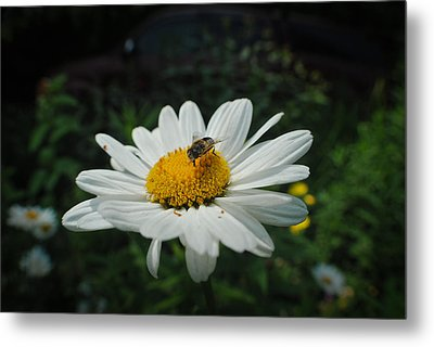 How Doth The Little Busy Bee Metal Print by Laura Pineda