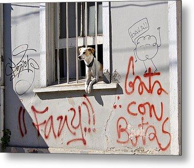How Much Is That Doggie In The Window? Metal Print by Kurt Van Wagner