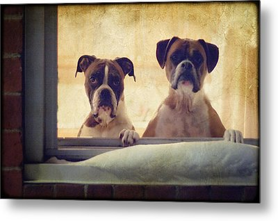 How Much Is That Doggie In The Window? Metal Print by Stephanie McDowell