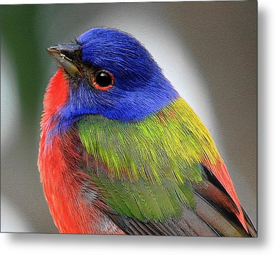 Hows This For Color Metal Print