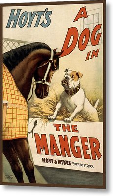 Hoyts A Dog In The Manger Metal Print by Aged Pixel