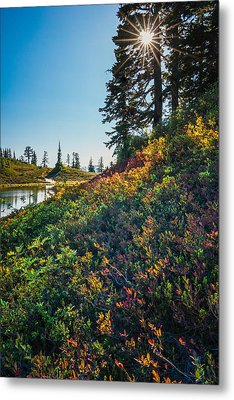 Huckleberry Afternoon Metal Print