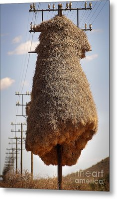 Metal Print featuring the photograph Huge Birds Nest On Pole by Michael Edwards