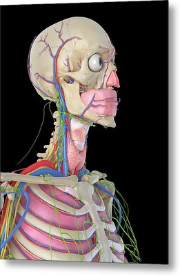 Human Head Metal Print