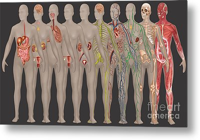 Human Systems In The Female Anatomy Metal Print by Gwen Shockey