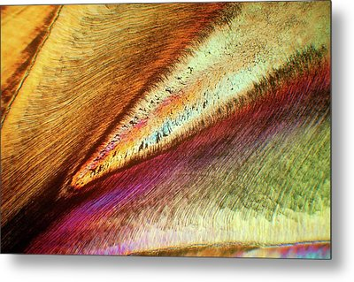 Human Tooth Metal Print