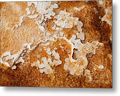 Humble Beginnings Metal Print by Beve Brown-Clark Photography
