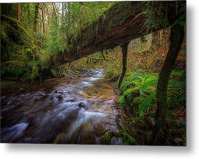 Humbug Creek Metal Print by Everet Regal