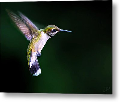 Hummer Ballet 2 Metal Print by ABeautifulSky Photography