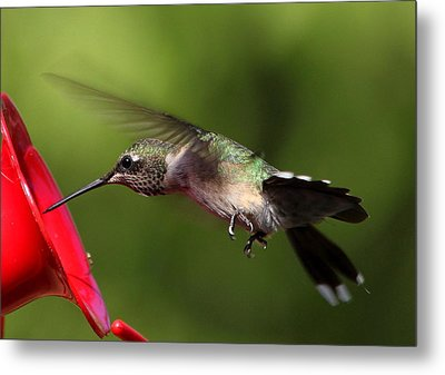 Look Hummer Eyelashes Metal Print by Reid Callaway