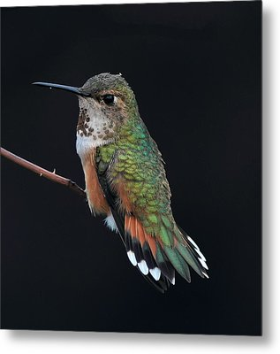 hUMMER Metal Print by Ray Morris