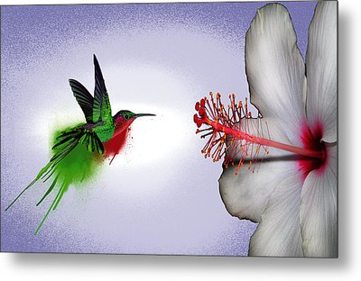 Hummer Splash In Flight Metal Print by Diana Shively