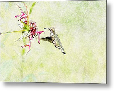 Humming Bird And Flower Metal Print by David Stasiak