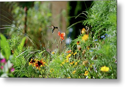 Metal Print featuring the photograph Humming Bird by Thomas Woolworth