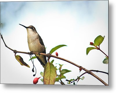 Metal Print featuring the photograph Hummingbird 2 by Tammy Schneider