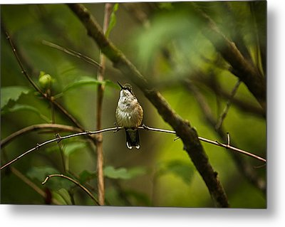 Metal Print featuring the photograph Hummingbird 3 by Tammy Schneider
