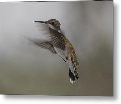 Metal Print featuring the photograph Hummingbird 6 by Leticia Latocki