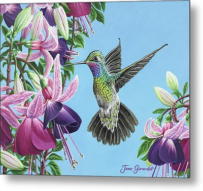 Hummingbird And Fuchsias Metal Print by Jane Girardot