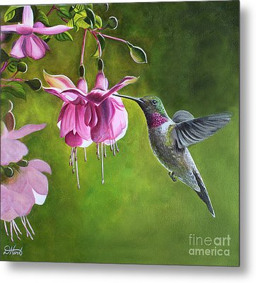 Metal Print featuring the painting Hummingbird And Fuschia by Debbie Hart