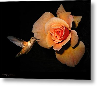 Hummingbird And Orange Rose Metal Print