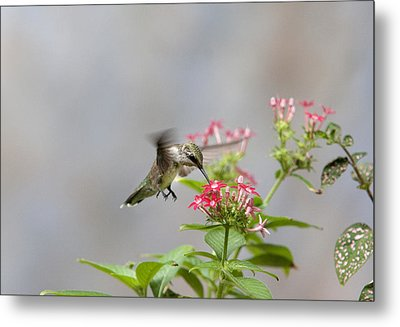 Hummingbird And Penta Metal Print